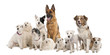 group of dog : german shepherd, border collie, Parson Russell