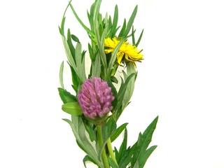 clover dandelion wormwood bouquet 3
