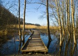 Wooden pathway over a swamp area in the early evening. poster