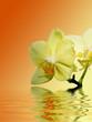 Fototapeten,orchidee,blume,blume,entspannung