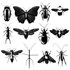 Insects and bugs in vector silhouette