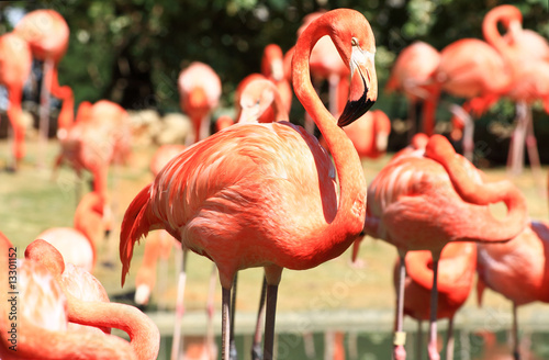 Plexiglas Flamingo red flamingo in a park in Florida