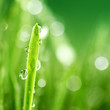 grass nature background