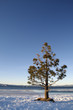 Lone tree on the shore of Lake Tahoe in winter
