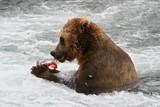 Fototapety Kodjakbär beim Lachsverzehr