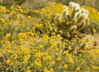 Desert covered with Arizona spring wild flowers and cactus.