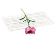 Romatic concept - red carnations flower on musical notes page