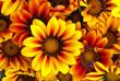 Detaily fotografie Flower Power