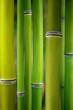 Fototapeten,bambus,asien,china,entspannen
