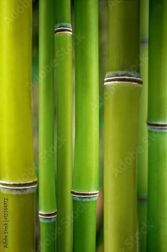 In de dag Bamboe bambus