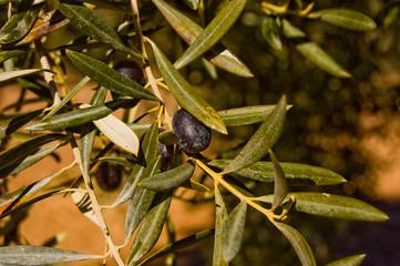 Detale de olivo