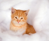 Yellow kitten in fluffy fake snow poster