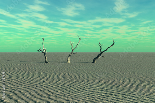 Dead Trees and Desert