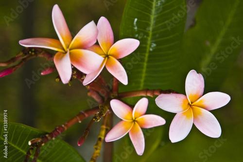 Fotobehang Singapore flower