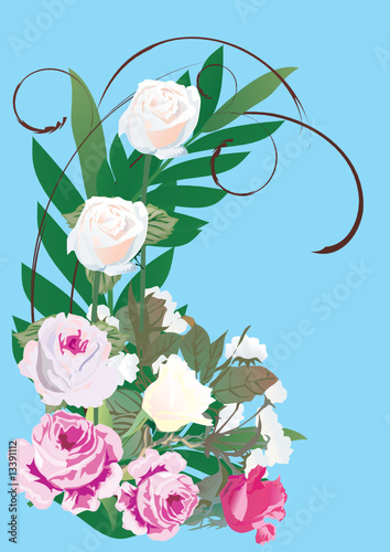 pink and white roses on blue