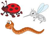 Ladybug, mosquito and worm poster