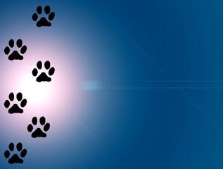 animal's tracks