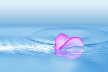pétale et rond dans l'eau