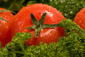 A red tomato on the background of fresh green verdure