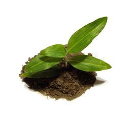 plantita 30409