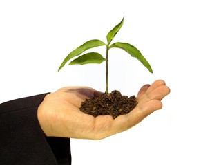 plantita en mano 30409