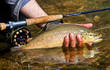 canvas print picture - Trout
