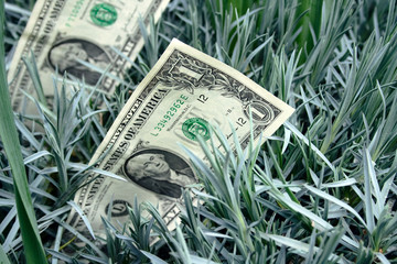 one dollars bankote among grass