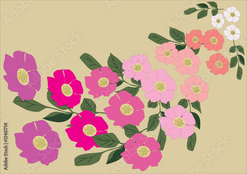 brier flower background