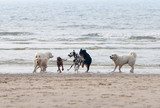dogs playing at the beach - Fine Art prints