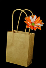 Plain Brown Bag
