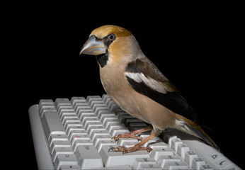 Bird on Keyboard 8