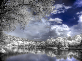 A forest lake is in an infra-red color