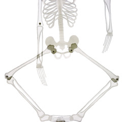 detail of the bottom part of skeleton isolated on white