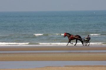 Sulky mit Fahrer und Pferd fahren am Meer entlang
