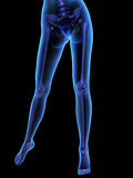 X-ray illustration of female human body and skeleton