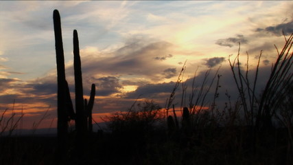 Desert Sunset with Cactus and Saguaro Spring (1080)