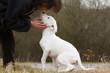 maîtresse chuchotant à son chien, en le regardant en face
