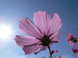 cosmos looking at the sun