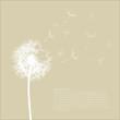 roleta: Dandelion