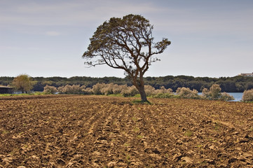 tree in a field