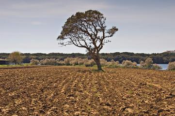 tree in a field