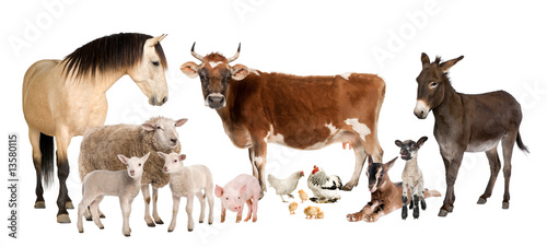 Papiers peints Ane group of farm animals : cow, sheep, horse, donkey, chicken, lamb