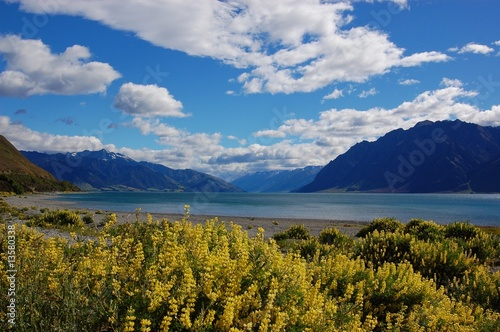 The spring day in New Zealand