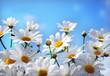 Quadro Flowers