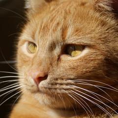 occhi di gatto rosso
