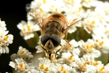 The fly on white small flowers