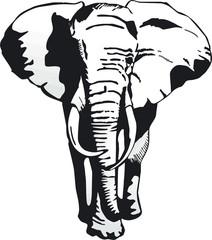 elefant v. vorn