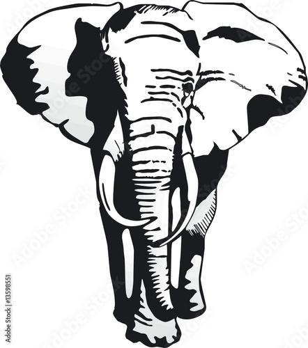 fototapete elefanten v vorn elefant afrika. Black Bedroom Furniture Sets. Home Design Ideas