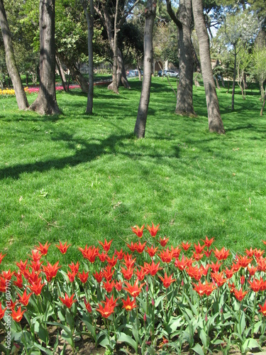 flowers in park