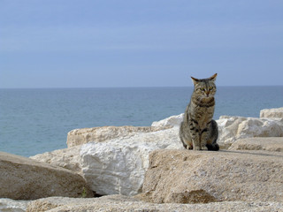 Wild cat on the rocks at the sea